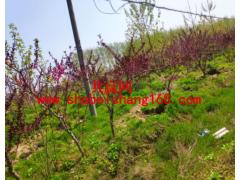 26.8亩树木一批拍卖公